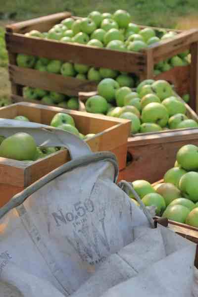 2018 Fall Apple Harvest & Hard Cider Pressing