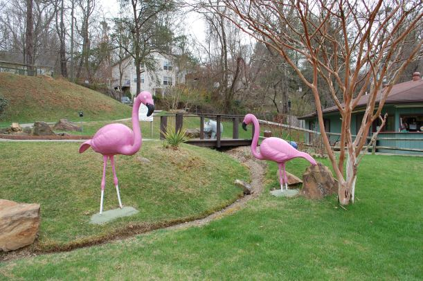 ...and the flamingos