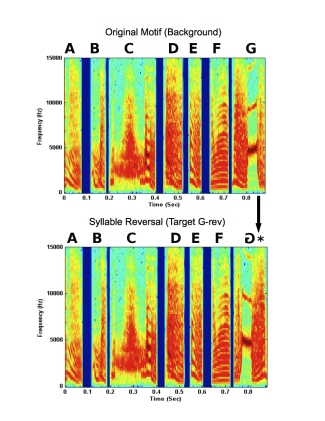 Music to Zebra Finch Ears: Which Acoustic Cues Do Zebra