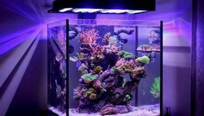 4 vantaggi di un nano reef