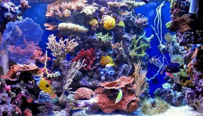acquario marino di comunità