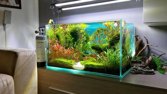 Come scegliere il posto perfetto per il tuo nuovo acquario