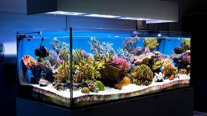 Acquario marino tropicale: allestimento - Idee Green