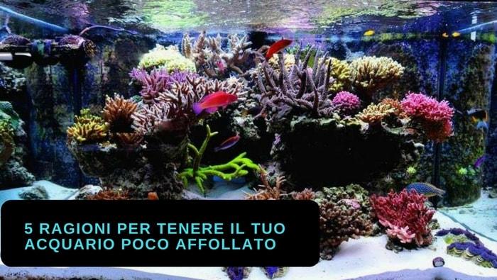 5 ragioni per tenere il tuo acquario poco affollato di pesci