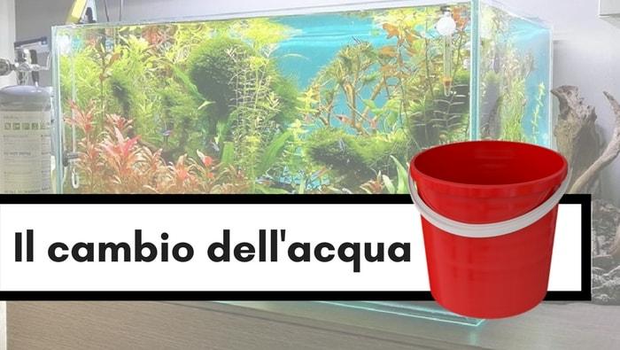 Come e quando cambiare l'acqua in un acquario