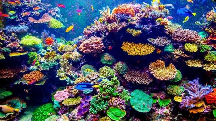I metodi di esportazione dei nutrienti negli acquari marini