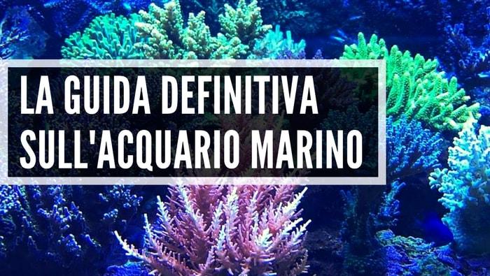 La Guida definitiva sull'acquario marino [Tutto, ma proprio tutto quello che ti serve per iniziare]