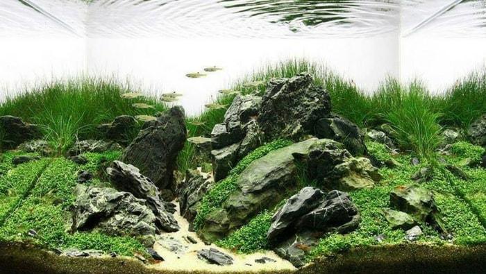 Rocce in acquario la pi grande guida sulla scelta for Arredo acquario acqua dolce