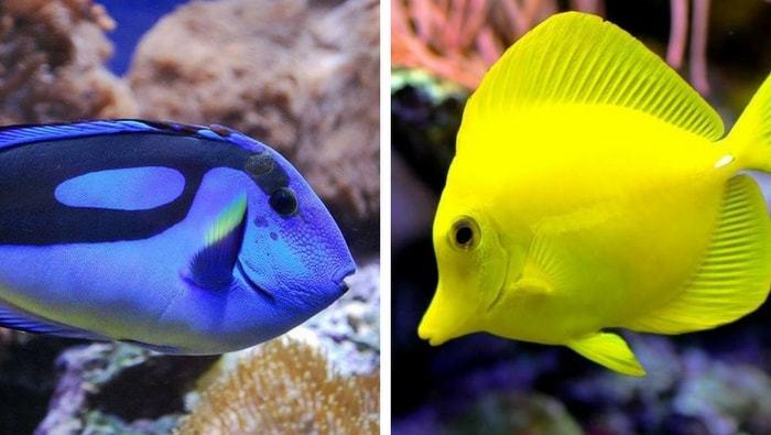 4 casi di pesci non compatibili