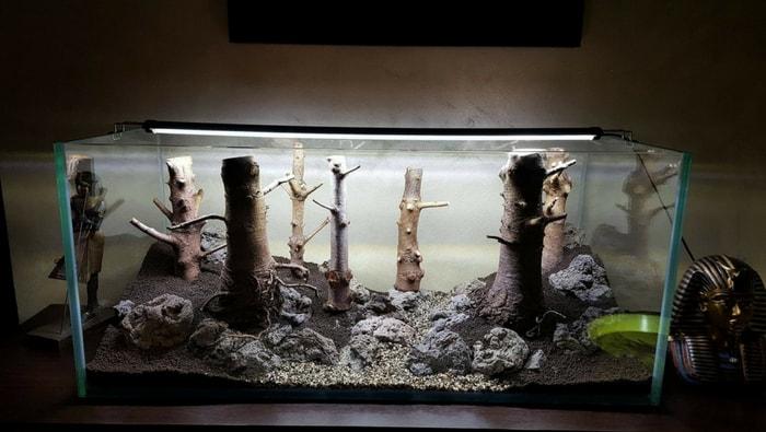 acquario discus artigianale 2