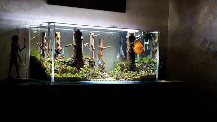 acquario discus artigianale 5