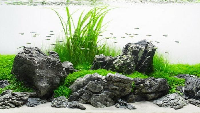 Acquario naturale iwagumi
