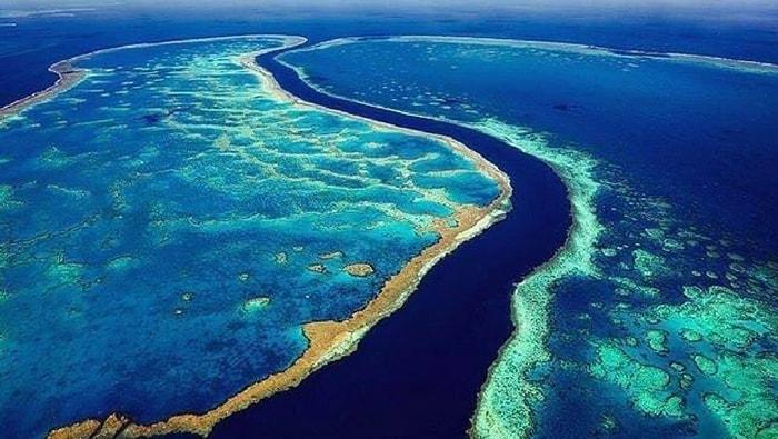 Scogliera corallina a vallo