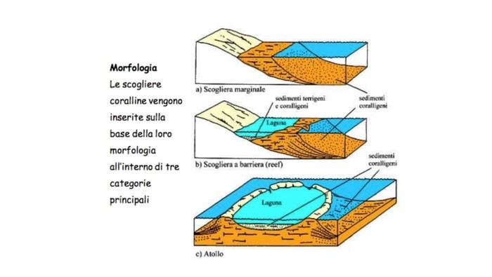 i tre tipi differenti di scogliera corallina