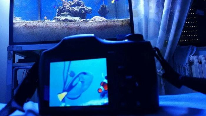 come fare acquario marino