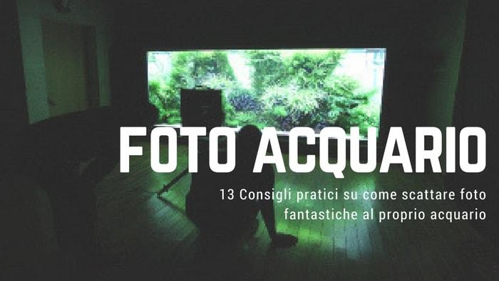 foto acquario
