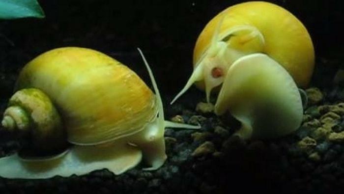 Rimedi naturali contro le alghe: ecco come sconfiggere le alghe in acquario