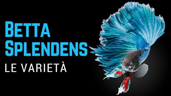Varietà di Betta Splendens
