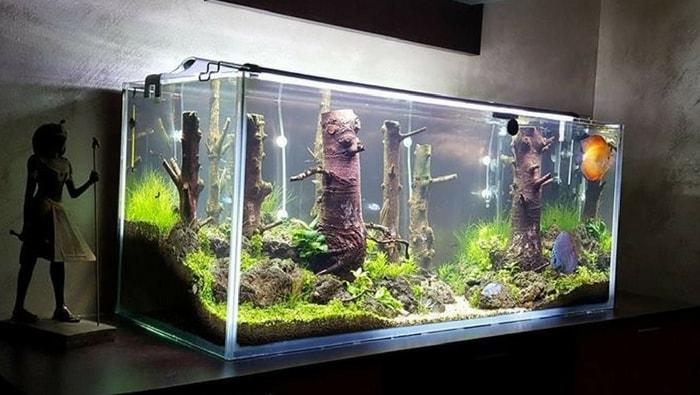 Acfologi il sottobosco di fabio nexus l acquario di discus e