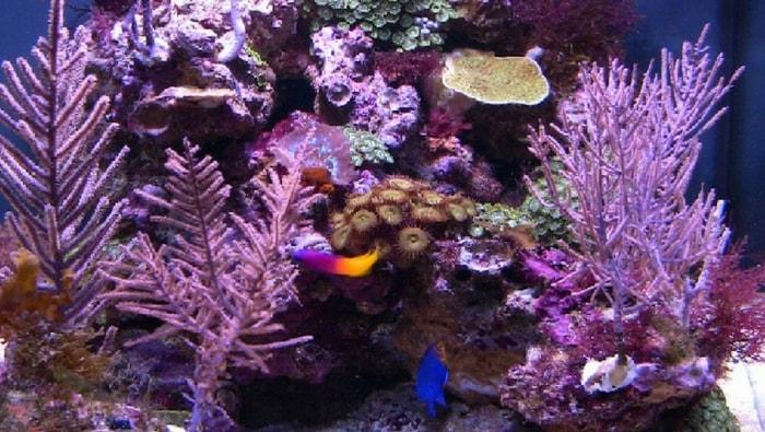 biotopo Mar dei Caraibi in acquario