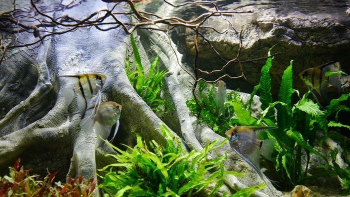 esempio di biotopo amazzonico