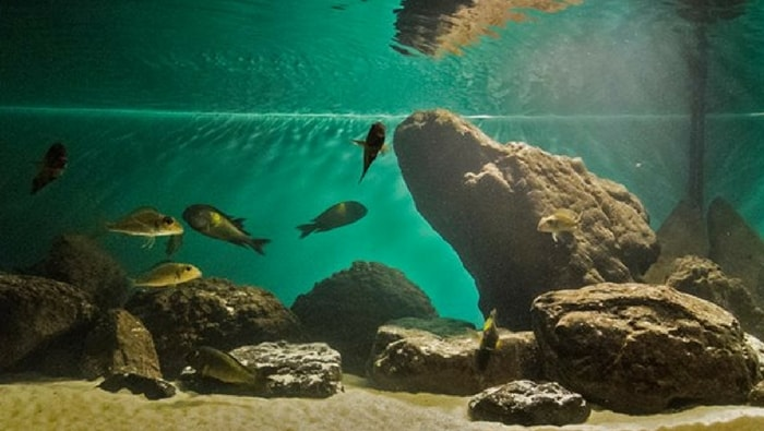Biotopo del lago Tanganica fondale fangoso