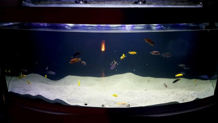 acquario senza rocce