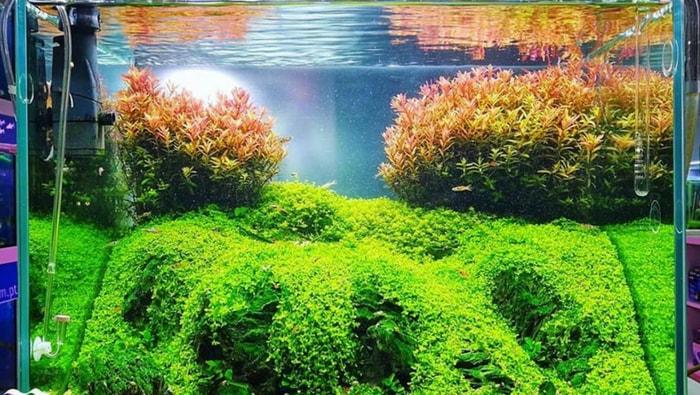 coltivazione delle piante acquatiche