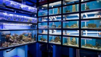 Guida su come scegliere un buon negozio di acquariofilia (seconda parte)