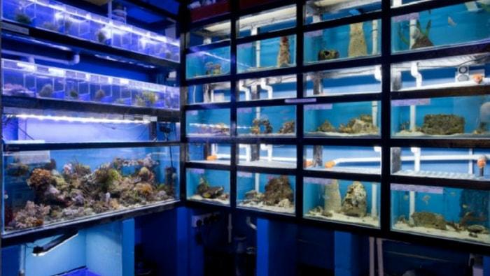 negozio di acquariofilia