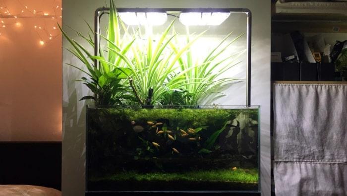 Piante Da Appartamento Per Acquario.Coltivazione Emersa Delle Piante In Acquario Natura In Vasca