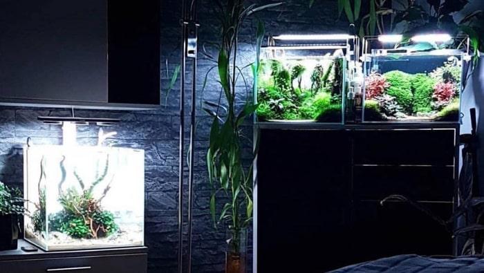 risparmiare denaro in acquariofilia