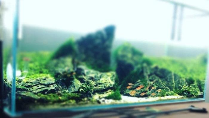 Salute dei pesci in acquario