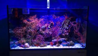 Gorgonie in acquario: la guida completa per chi vuole iniziare
