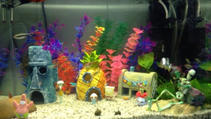 oggetti da non inserire in acquario