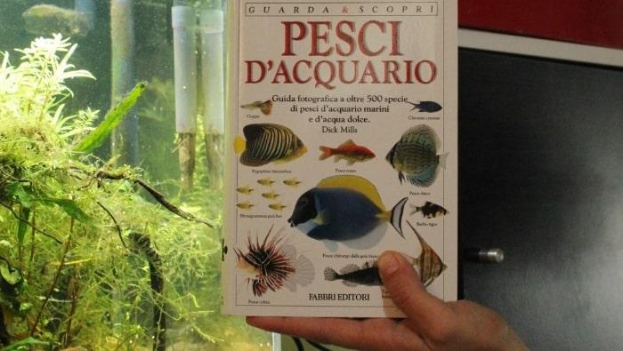 Pesci d'acquario di Dick Mills