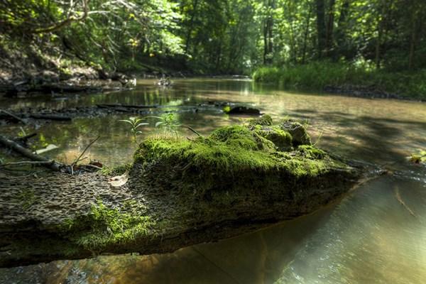 Photo of Bicentennial Woods