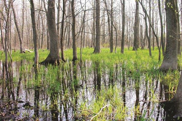 Photo of Art Hammer Wetlands