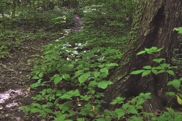 Photo of Maple Wood Nature Preserve