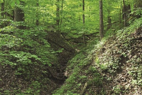 Photo of Pehkokia Woods