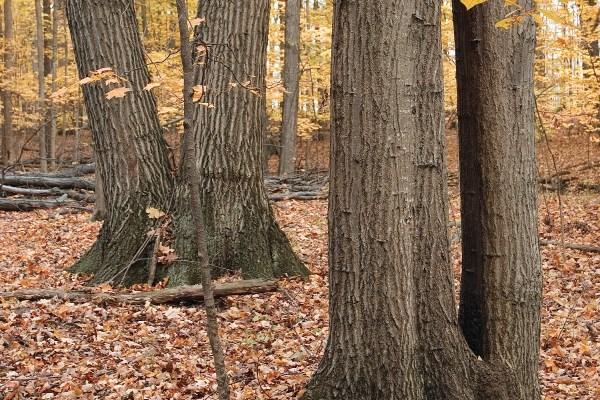 Photo of Fox Fire Woods