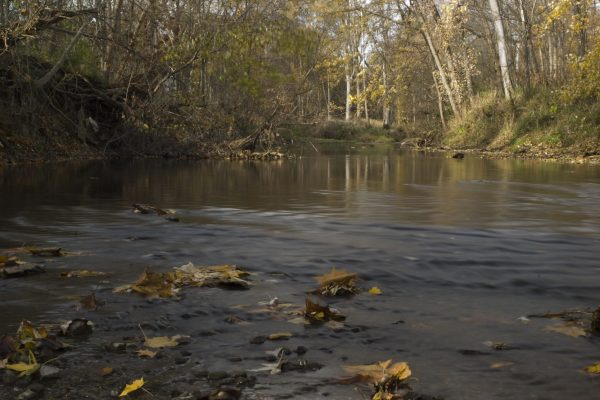 Photo of James P. Covell Nature Preserve