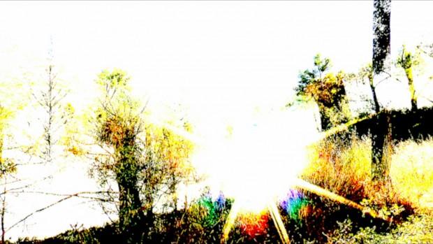 rolland cicadas_in_the_sun03