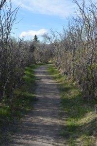 dirt path through shrubs