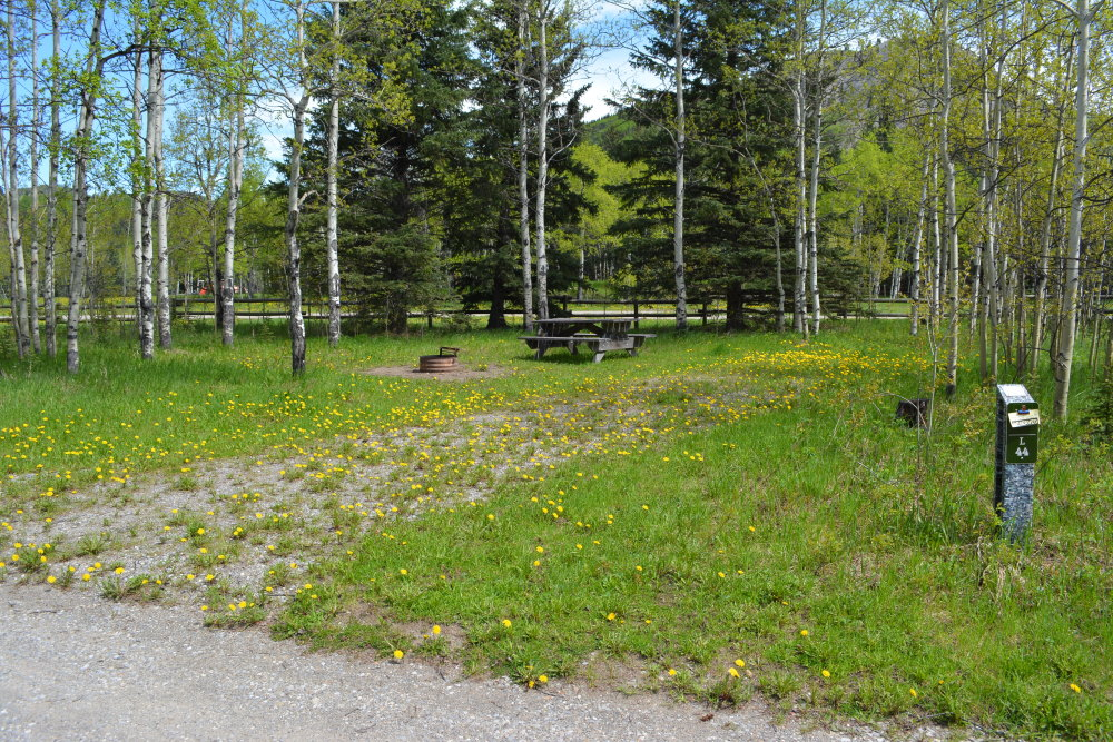 Rustic campsite with aspen and dandelions