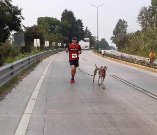 """""""El Santo"""", es un perro weimaraner de 4 años y medio, avecindado en la ciudad de Xalapa."""
