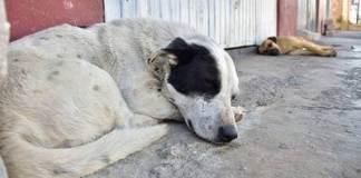 Animalistas del municipio de Coatepec denunciaron que en este municipio no hay reglamentos para atender casos de maltrato animal.