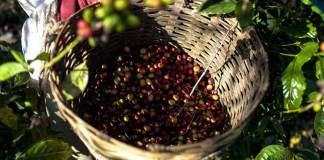 El Gobierno del Estado de Veracruz, a través de la Secretaría de Desarrollo Agropecuario, Rural y Pesca (SEDARPA), gestionó espacios de exposición para que 10 productores de café veracruzano participen en la Cumbre Latinoamericana del Café 2019 que se lleva a cabo los días 01, 02 y 03 de agosto en la Ciudad de México.
