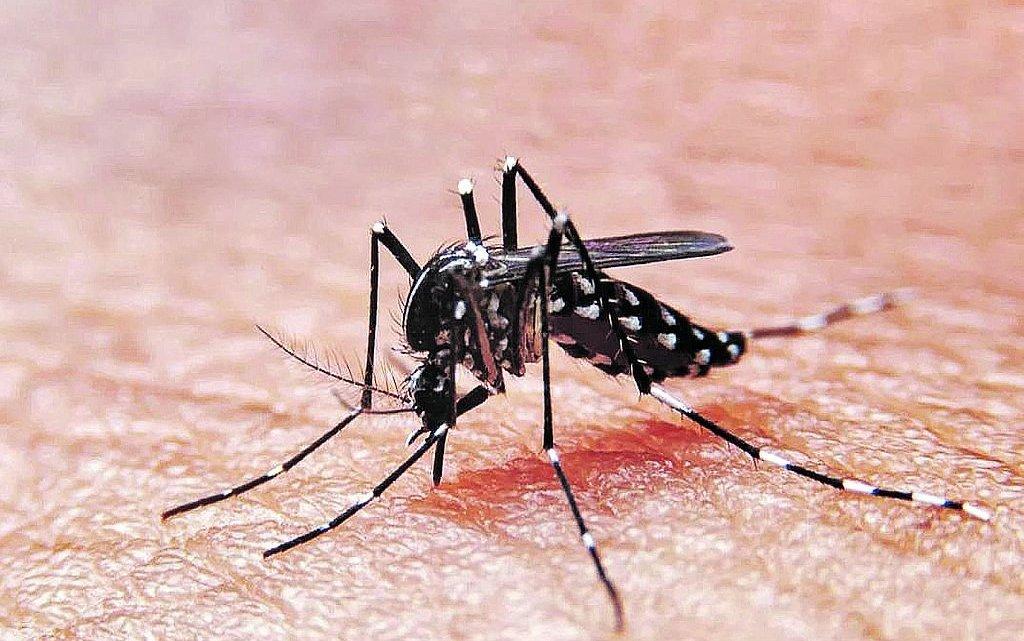 Estados Unidos: Se podrían liberar 750 millones de mosquitos modificados