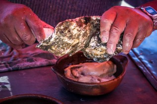 Chiloe's grande oysters.